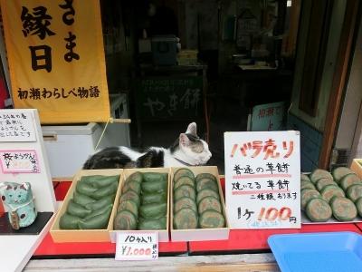 長谷寺 草餅屋の猫