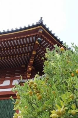 興福寺南円堂・右近の橘