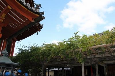 興福寺南円堂・左近の藤