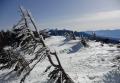 茶臼山の「エビのしっぽ」