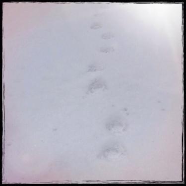 歩んできた道。