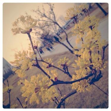漢江にも少しずつ春の足音が…。桜ももうすぐですね^^