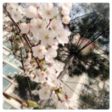狎鴎亭にも春が…。