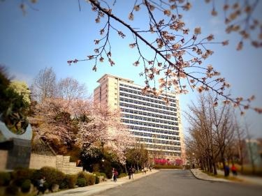 桜咲く国民大学へ。