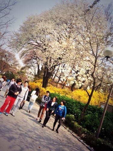 大学のキャンパスで感じる春。