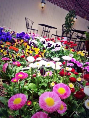 ホンデのカフェベーカリー前にて。元気な花達が出迎えてくれました^^