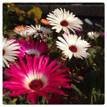 花の様に…。