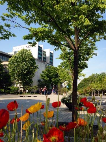 ソウル市立大学のキャンパスも夏一色。