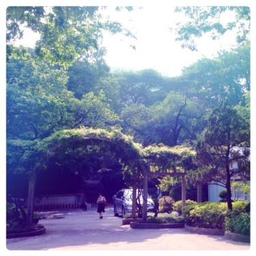 強い日差しをキャンパスの緑が和らげてくれます。