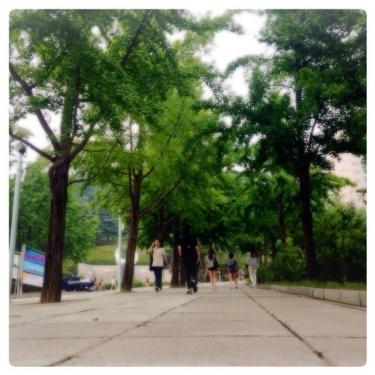 国民大学キャンパス内もすっかり夏の雰囲気に。
