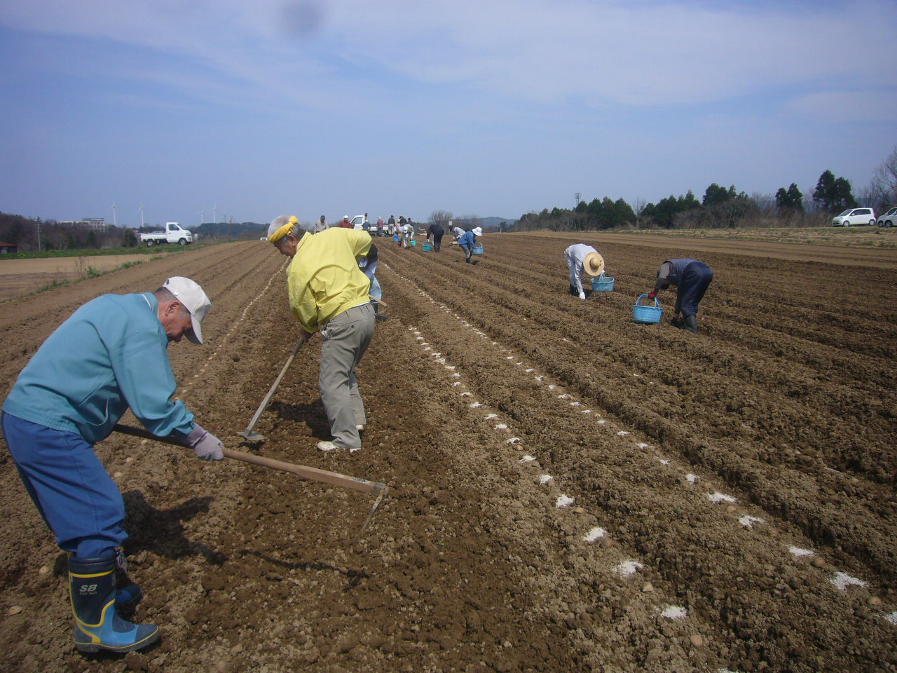 ジャガイモ植えクワ H26.3.29