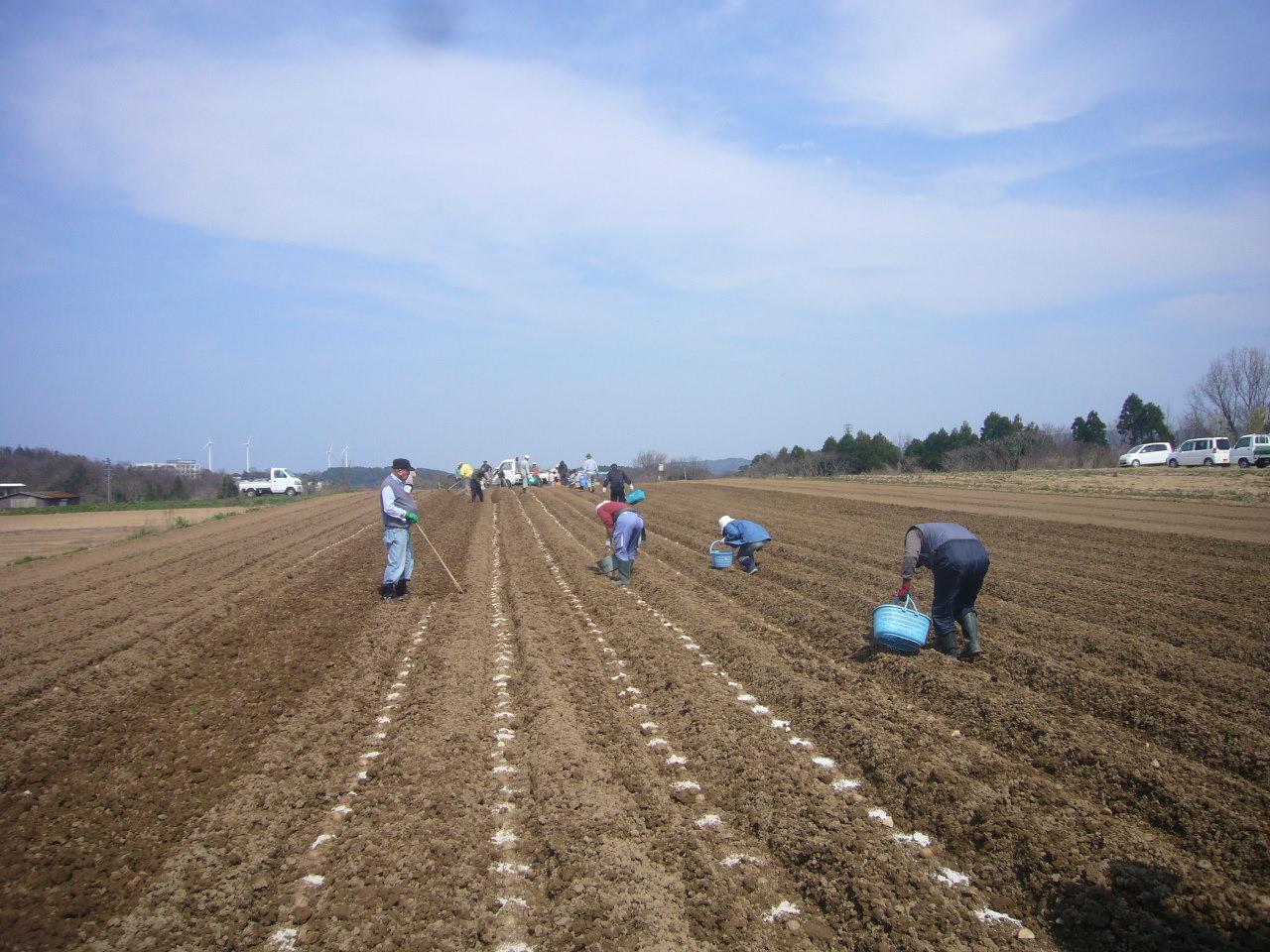 ジャガイモ植え H26.3.29