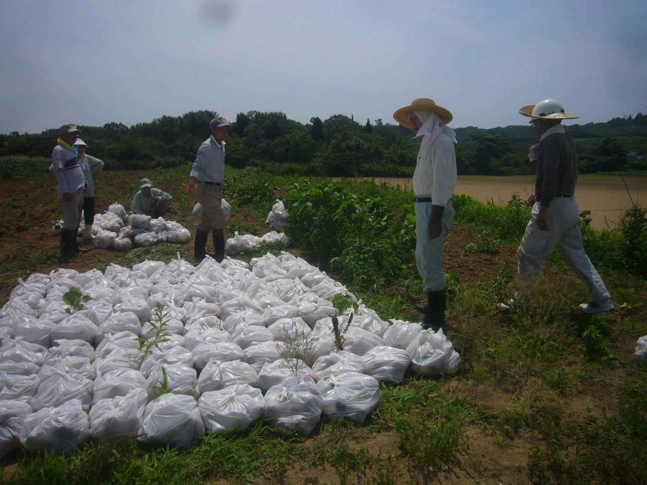 収穫H26.7.12撮影