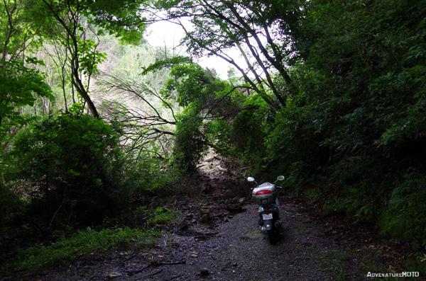 竹岡林道調査(2014年6月)
