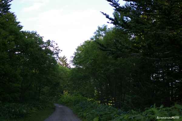 『7月の道央林道探検』