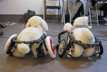老犬との暮らし方セミナー005