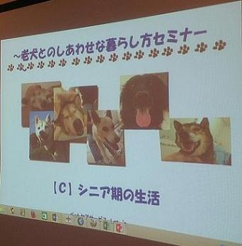 老犬との暮らし方セミナー001