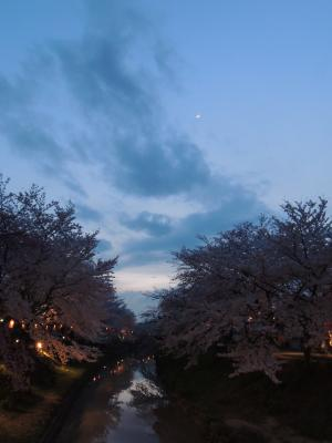 佐保川の夜桜
