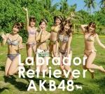AKB48 ラブラドール·レトリバー 初回Type-K CDジャケット写真 松井珠理奈 横山由依 柏木由紀 川栄李奈 入山杏奈 須田亜香里 ビキニ水着 おっぱいの谷間 太もも 高画質エロかわいい画像