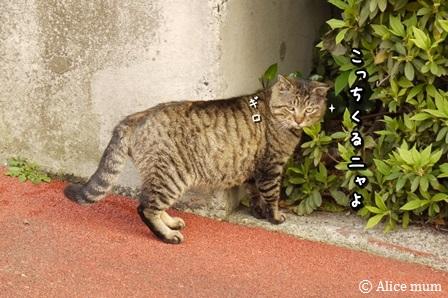 20_201404182013381f1.jpg