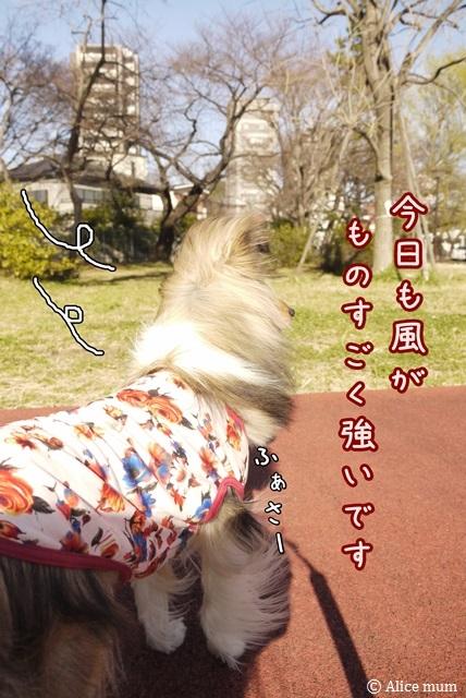 2mini_20140322004901a4c.jpg