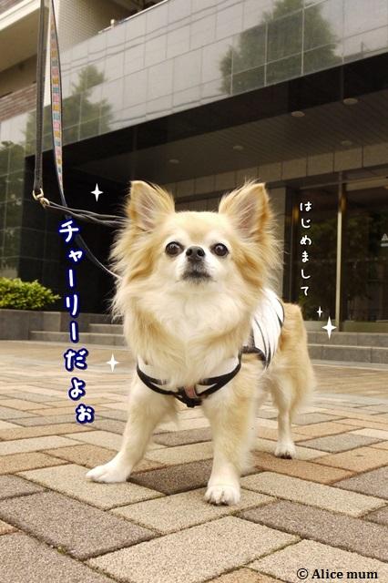 3_201405132327560e7.jpg