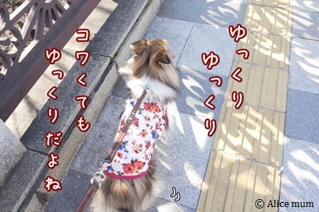 6mini_20140322005954567.jpg