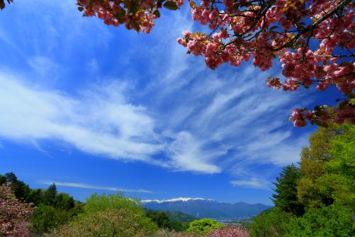 高遠町の関山咲く高台から白銀の中央アルプス