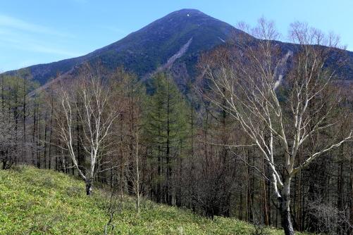 八子峰から望む蓼科山