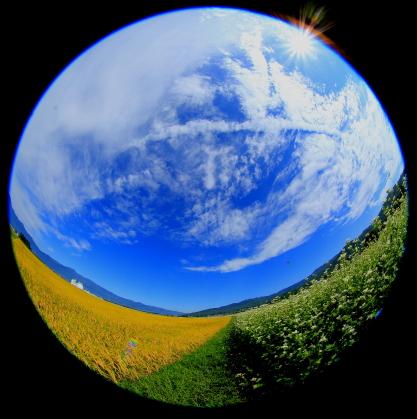 特殊のレンズで地球のように水田と蕎麦畑を表現
