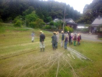 苗床の発芽確認と草への対処