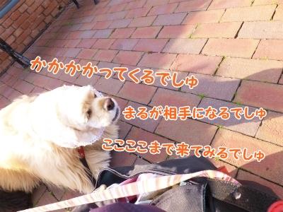 173_20140226212353ecb.jpg