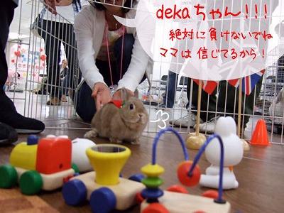s-usa_undoukai_5.jpg