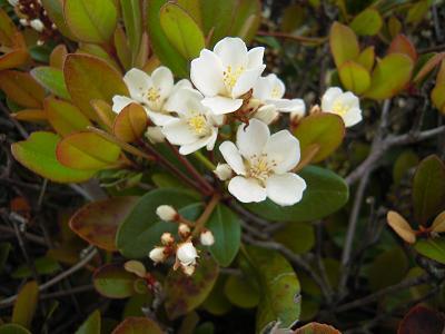 葉の中のお花
