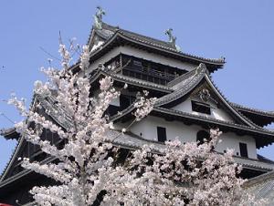 松江城 開花