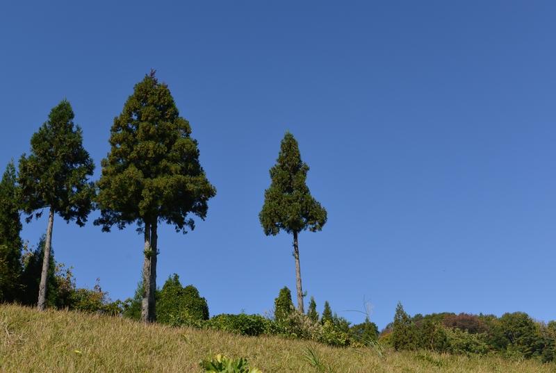秋空に木-1