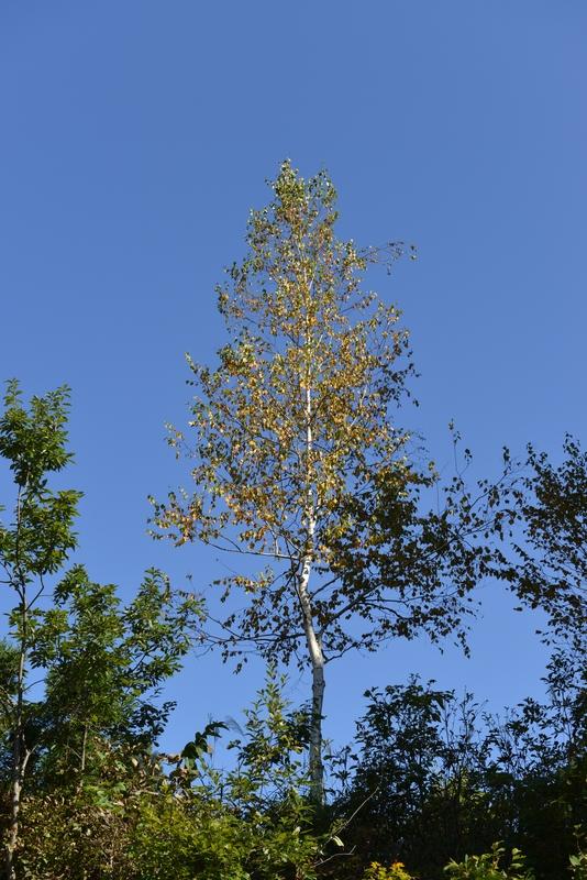 秋空に木-2