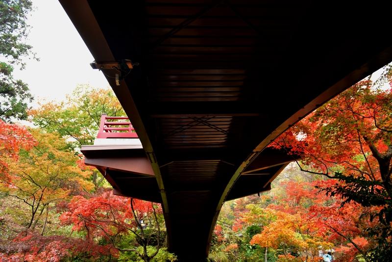 もみじ谷 観月橋-1