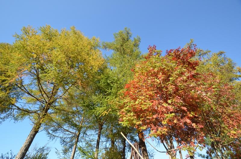 里山の秋 木々-1