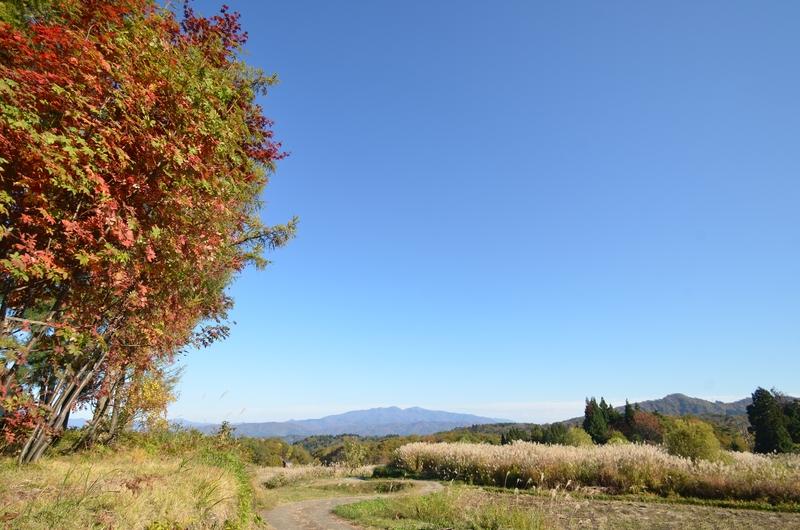 里山の秋 木々-2