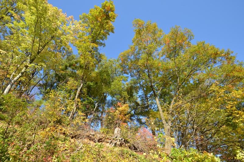 里山の秋 木々-3