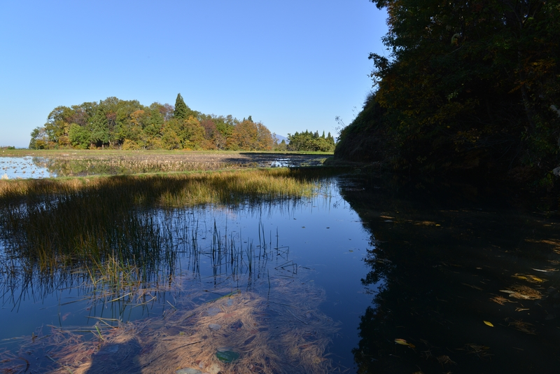 里山の秋  水田と-2