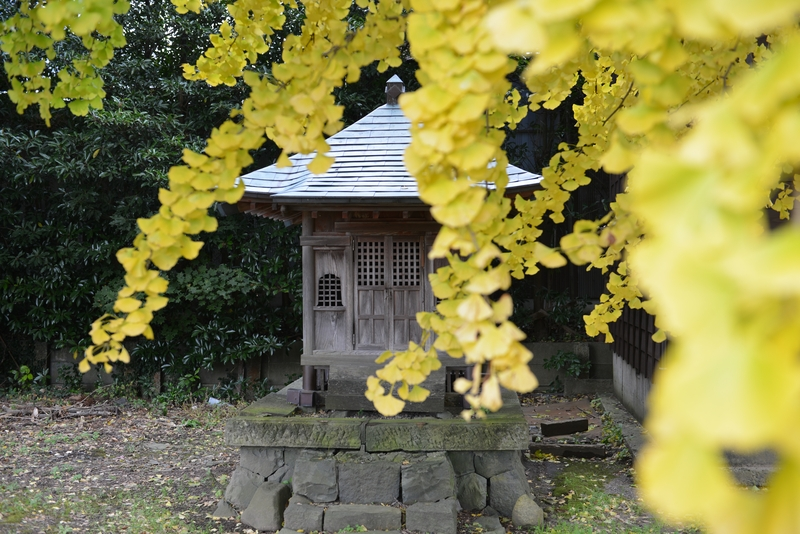 神社と銀杏-3