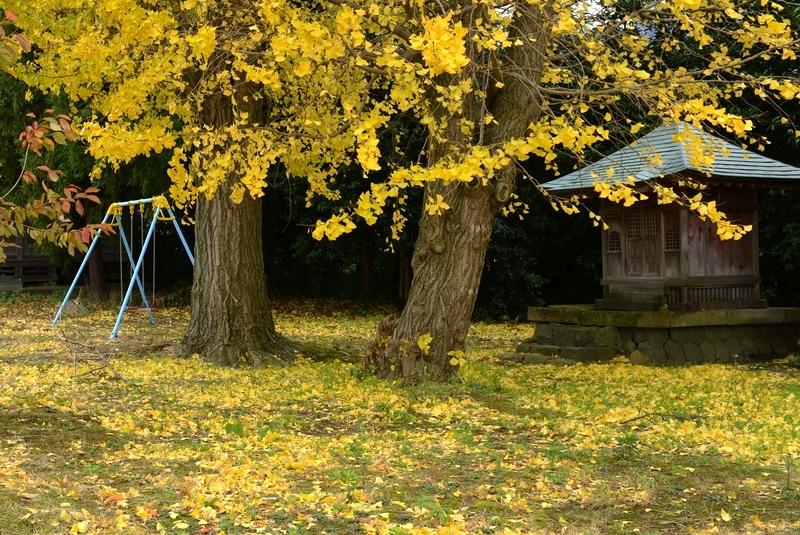 銀杏と神社-1