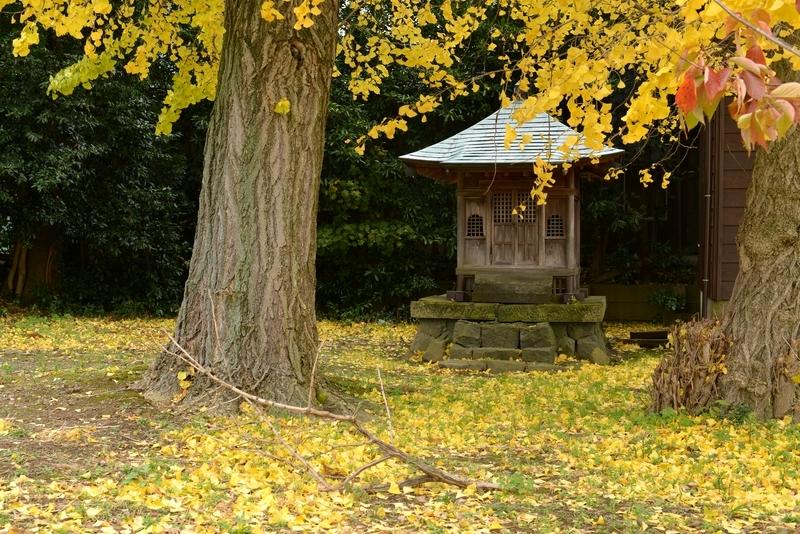 銀杏と神社-2
