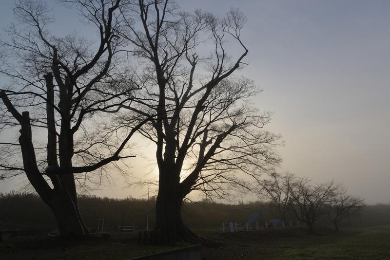 朝霧の中-1