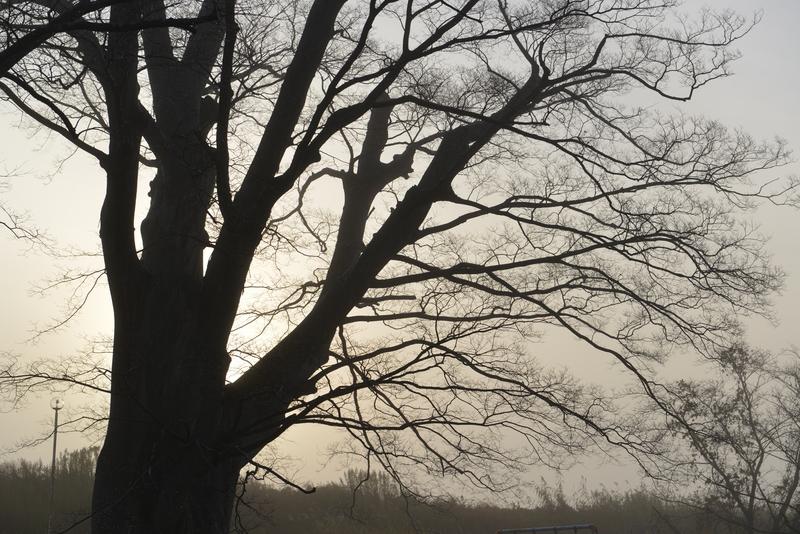 朝霧の中-2