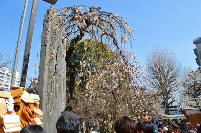 湯島天神うめ祭り 017