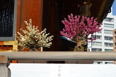 湯島天神うめ祭り 027