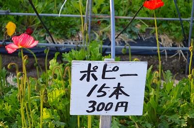 南房総 花畑 006